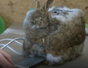 Тостер из кролика
