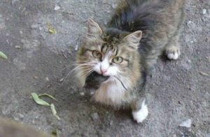 кот поймал мышку