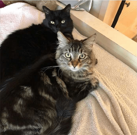 Тина и Луиза