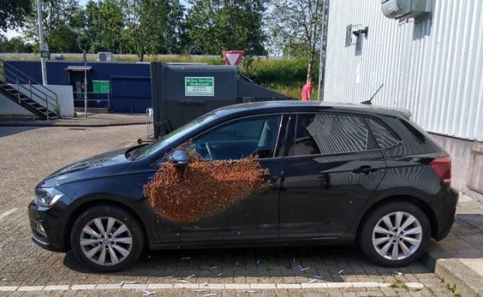 Пчёлы на авто